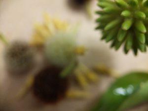 Red Vein Vietnam Kratom seed pods for sale