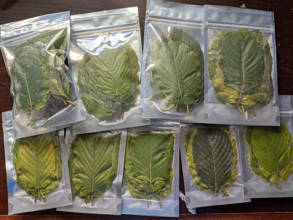 Shipping 150 fresh USA kratom leaf in the mail!